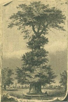 oldest image of Luther`s Tree
