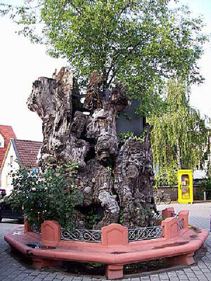 Luther's Tree in Pfiffligheim, photo: Worms City Archive